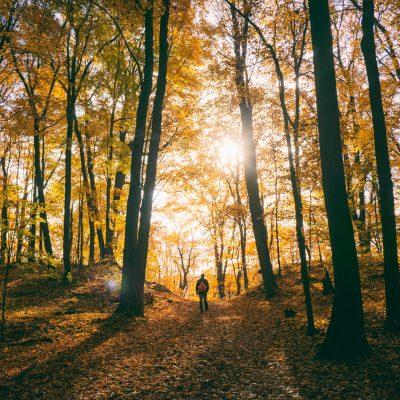 Herbstwanderung mit Amalie und Charitas nach Kleinvoigtsberg